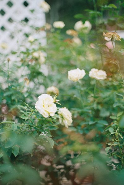 cypress grove estate house _ cypress grove estate house wedding _ orlando wedding photographer _ Tiffany danielle photography _ garden wedding _ antique wedding _ jane austen inspired wedding _ jane austen (17)