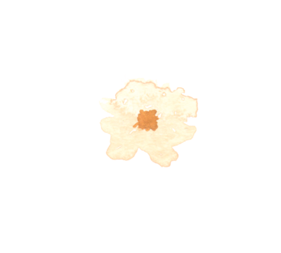 3 flower