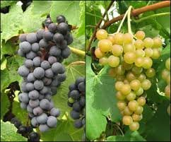 Both Grapes