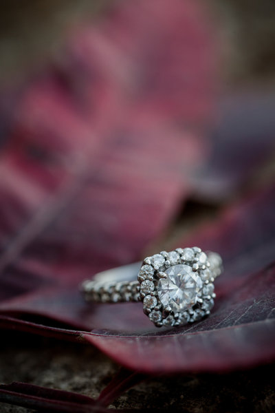 Engagement ring sitting on a maroon leaf engagement session by Knoxville Wedding Photographer, Amanda May Photos.