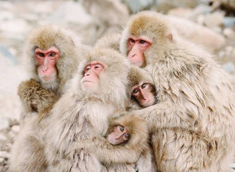 RYALE_Snow_Monkeys_3.17-028