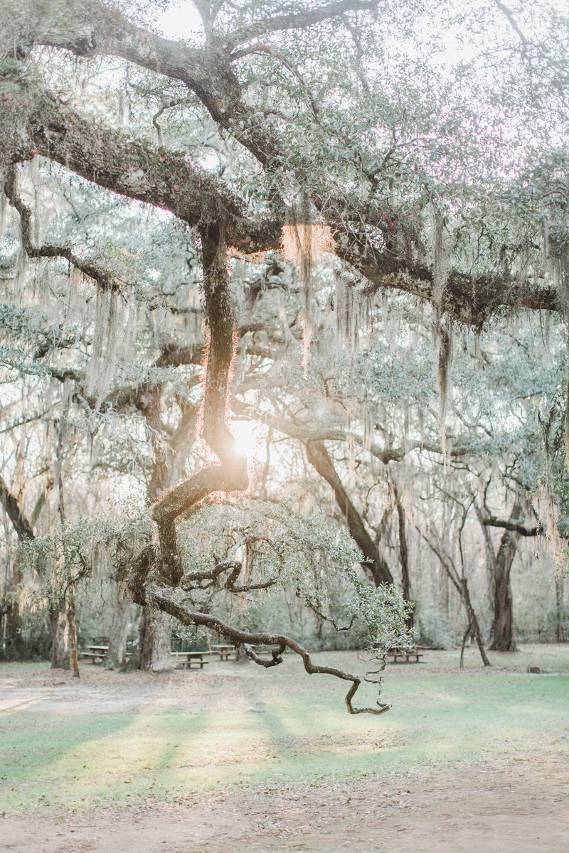 Charleston by Tonic Site Shop_Annamarie Atkins_07