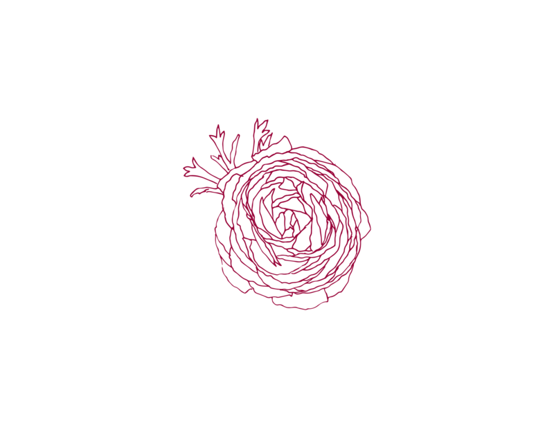 ranunculus_01
