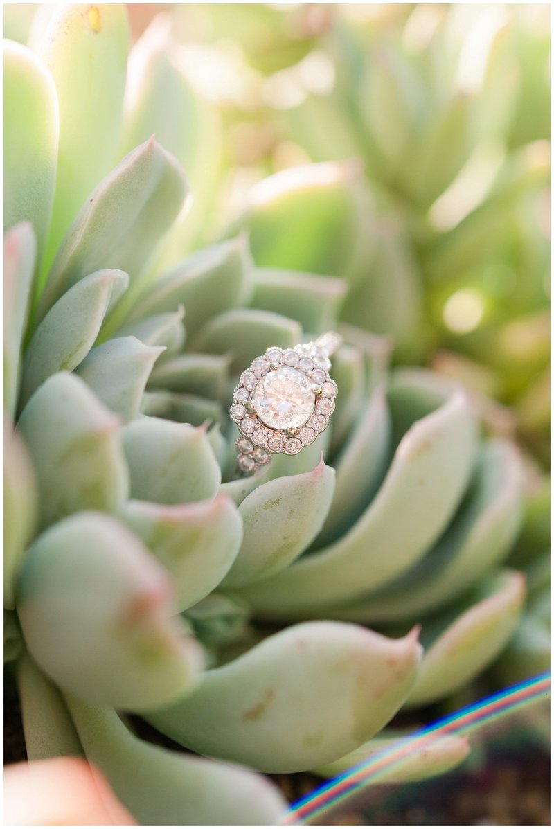 Mansfield Ohio Engagement Session Kingwood Garden Center_0022