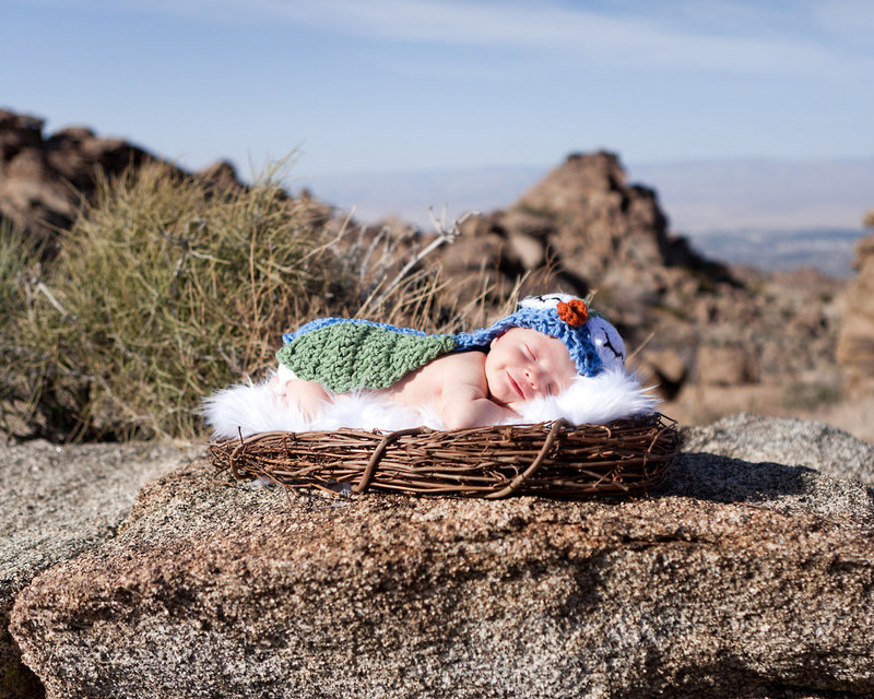 Desert photo- Newborn in a birds nest basket