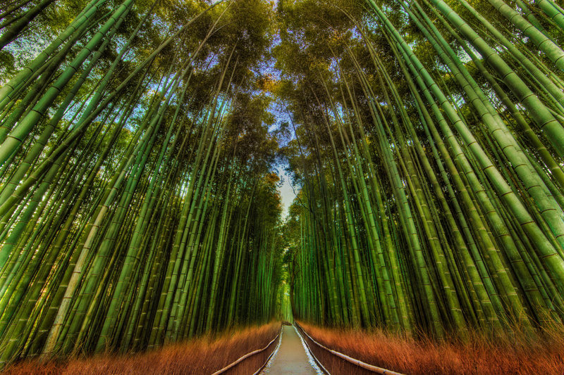 bamboo-trail-japan