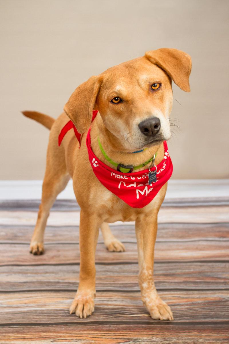 Virginia Dog Rescue Organizations