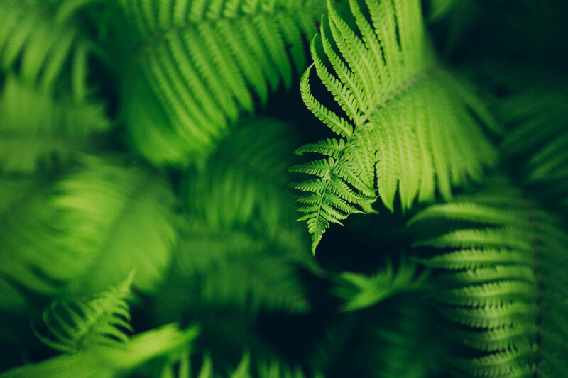 canyon-north_wedgewood-ventures-north-vancouver-ferns