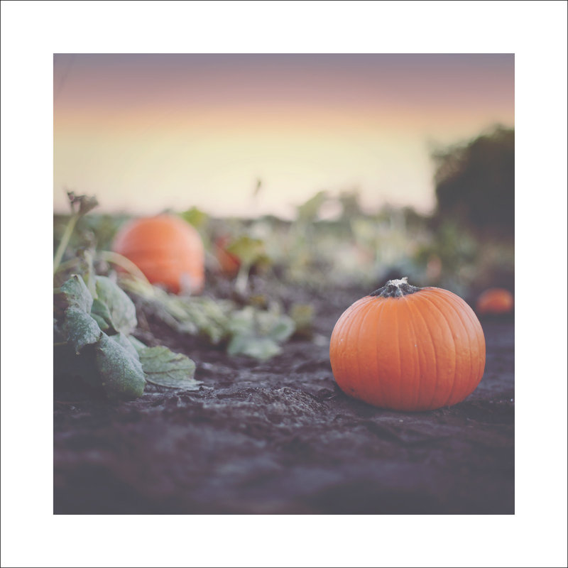 8x8_PumpkinPatch