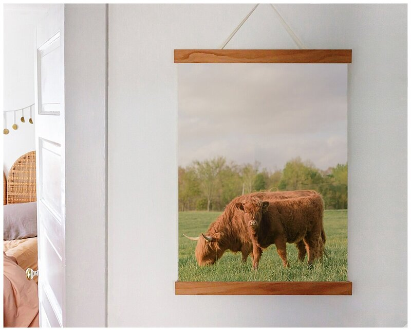 Samantha Walker Photography Highland Cattle