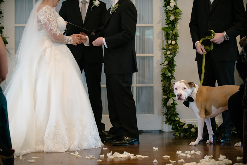 JandDstudio-antrim-1844-maryland-wedding-photography-brideandgroom-ceremony-dog