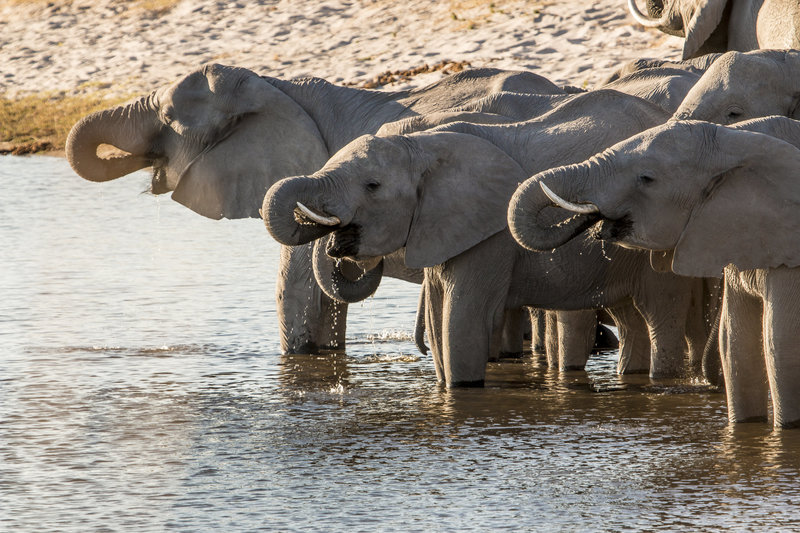 Raven 6 Studios filming wild elephants in Namibia