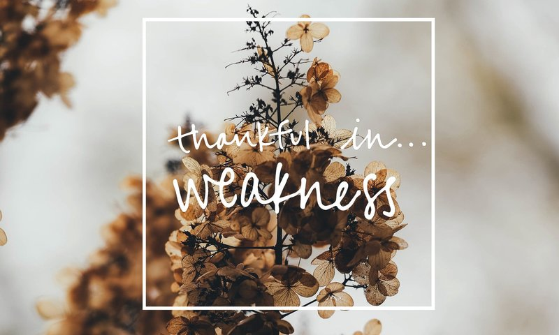 Thankfulin_weakness_feature-1