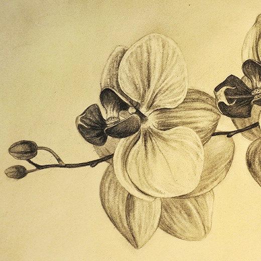 Farish orchid