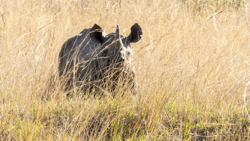In the field with the Black rhino while filming with Omujeve Safaris and Raven 6 Studios