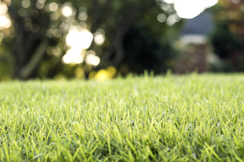 Eco-Friendly Turf and Lawn Care | The Green Queen Non-Toxic
