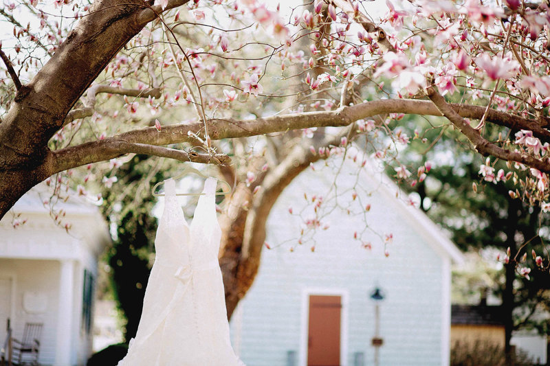 Dress hangs on Dogwood tree, Lewes Historical Society, Delaware