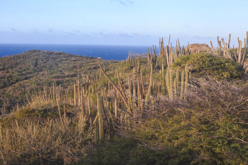 Aruba 2015 5041