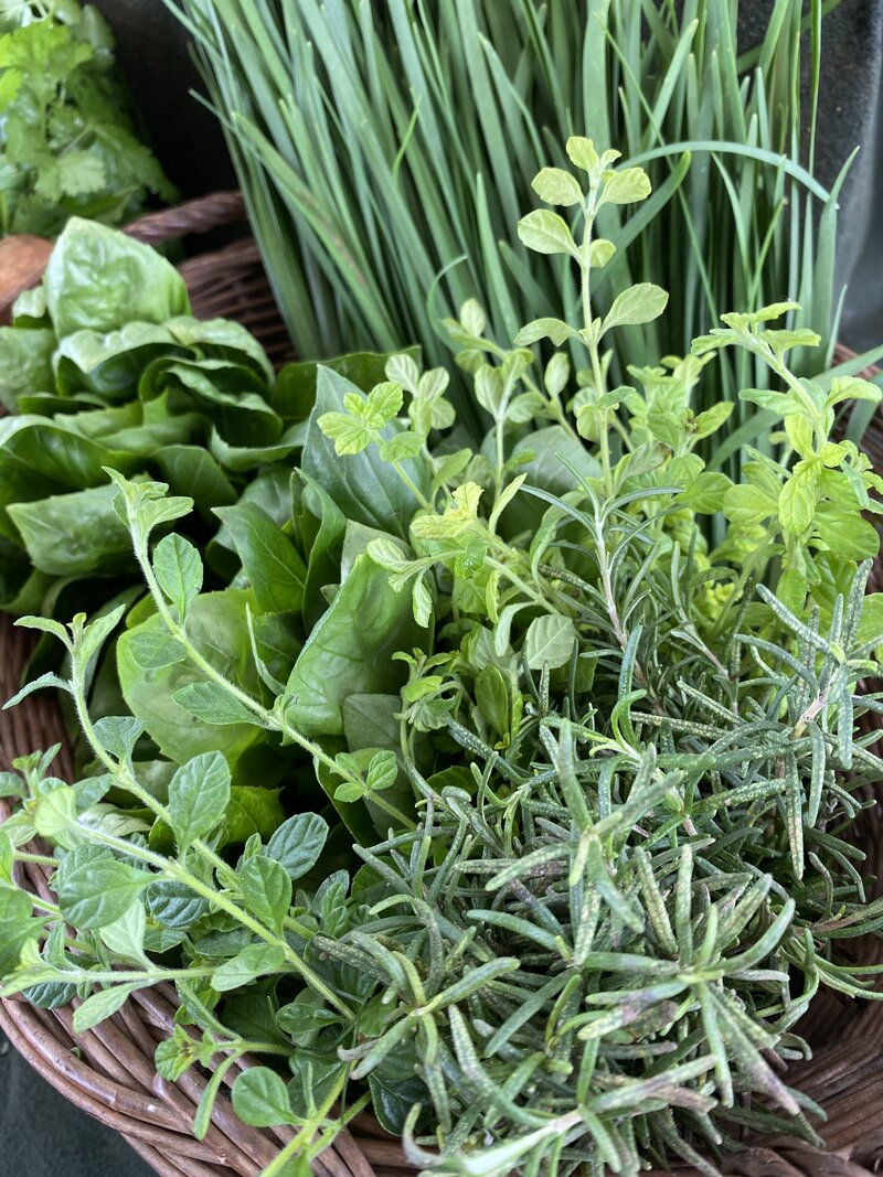 Rosemary, oregano, basil and chive