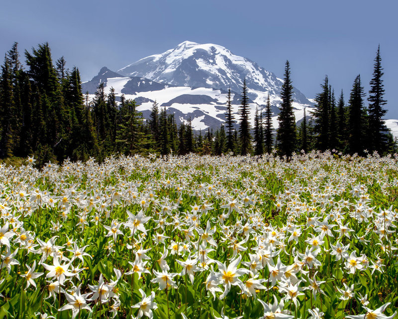Mount_rainier_national_park