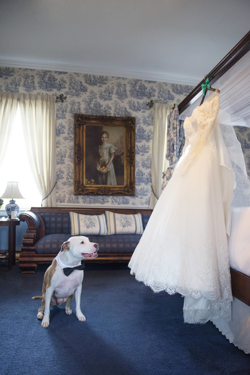 JandDstudio-antrim-1844-maryland-wedding-photography-weddingdress-dog