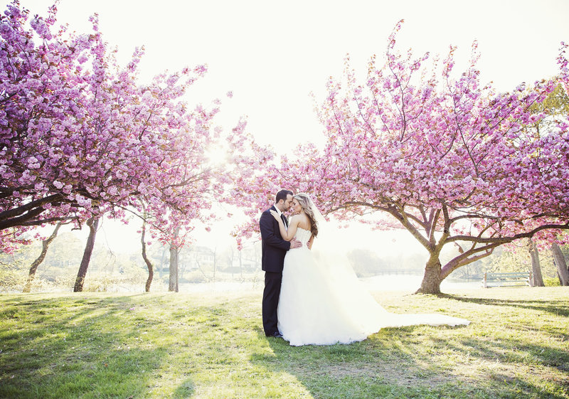 bride and groom kiss in front of two cherry blossom trees in full bloom