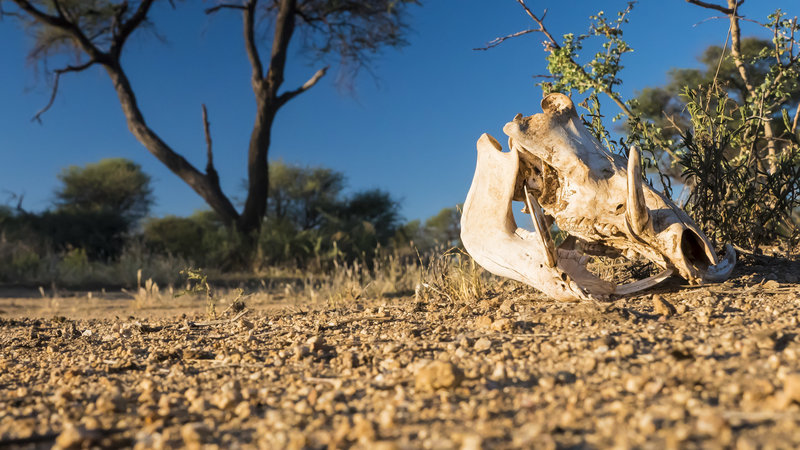 Life is brutal in Namibia. In the field with Omujeve Safaris and Raven 6 Studios
