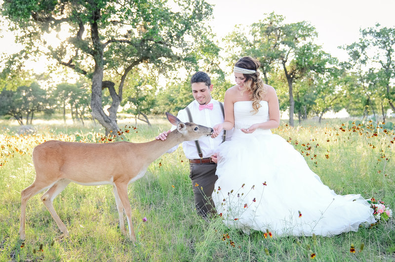 Austin Wedding Photographer Deer