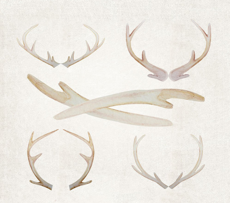 antlers2
