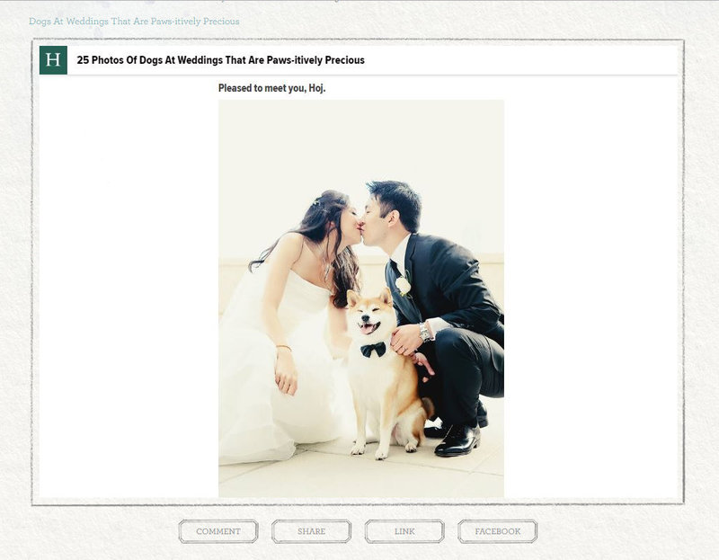 huffingtonpost_dogsatweddings