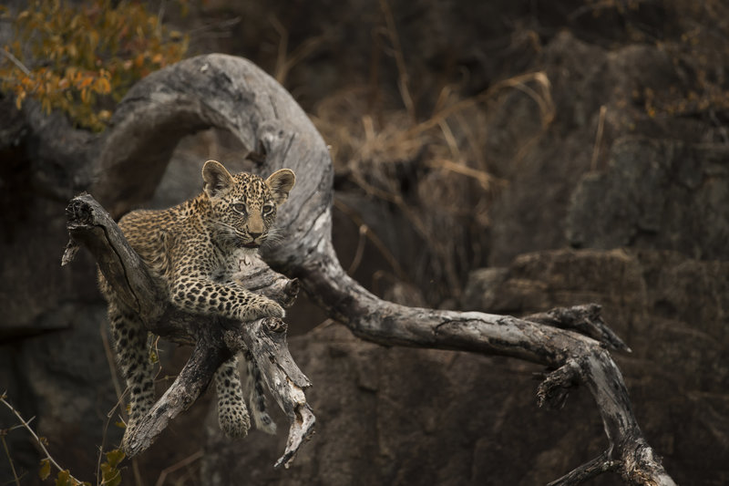 Singita-Castleton-Wildlife7