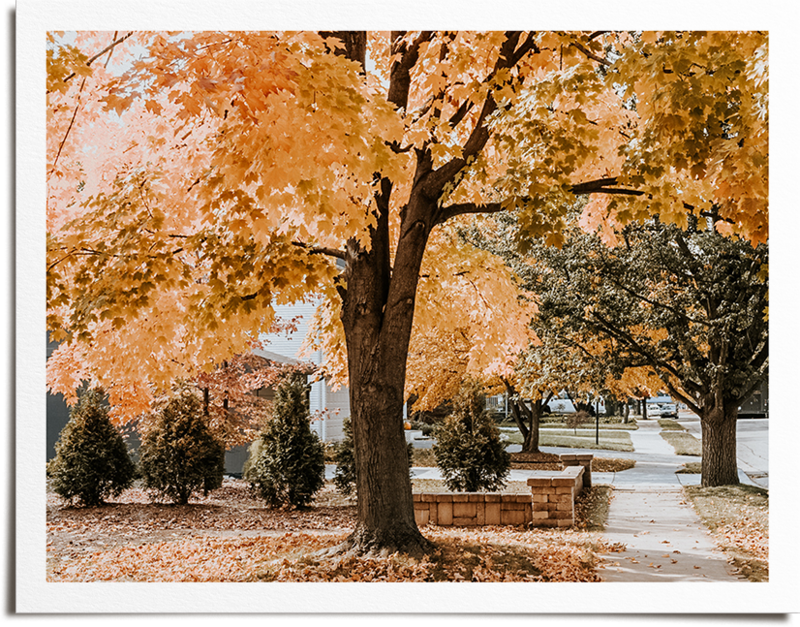 photo-frame-fall-treepng