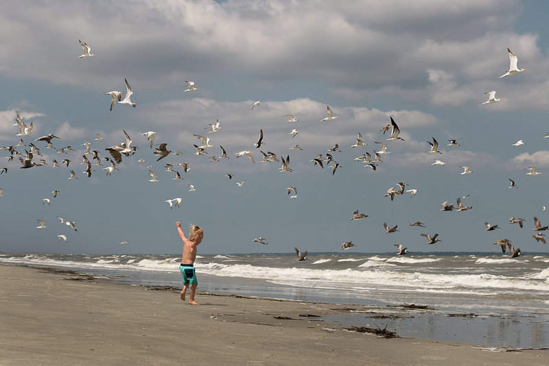 Boy running with the birds on the beach