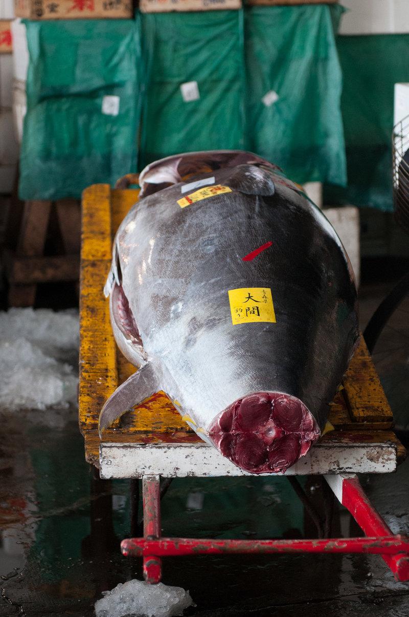 1_Tsukiji 40-2016-Portfolio