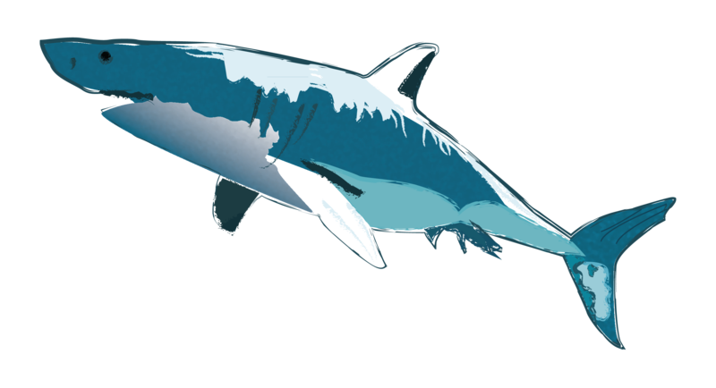 SharkIllustration