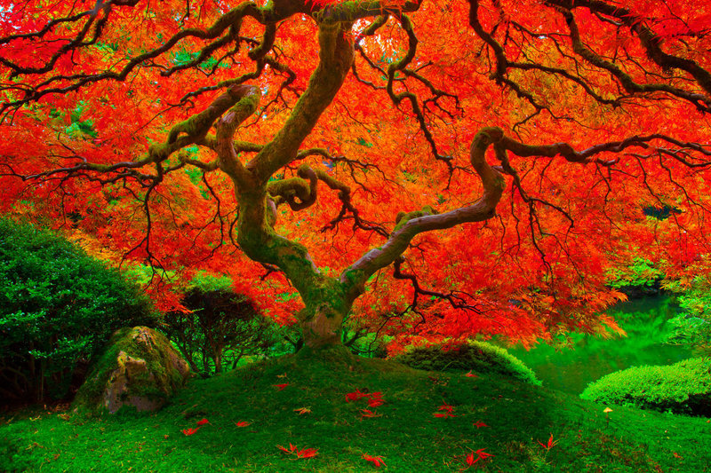 tree-of-life-japanese-garden