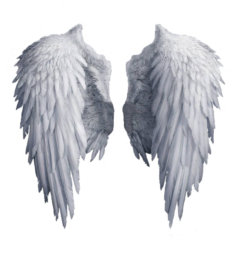 wings_PNG45