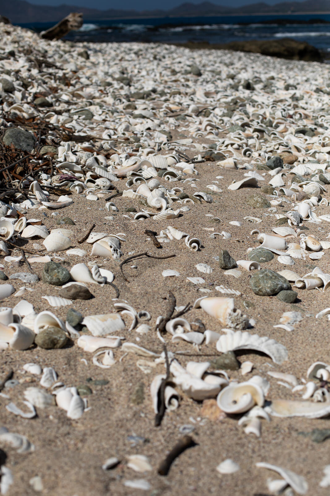 Walking along a deserted island covered in shells.