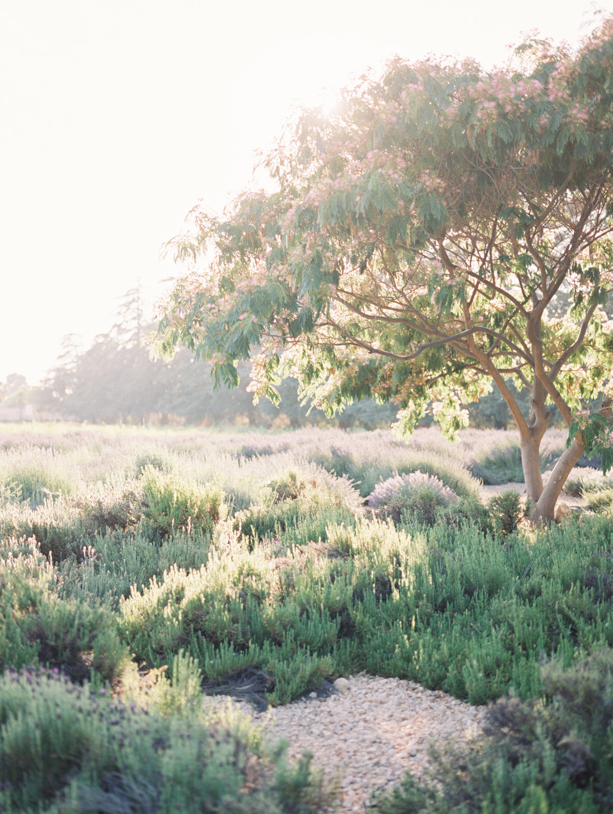 Carrie McGuire Photography Fine Art Film Wedding Engagement Photographer California Wine Country28