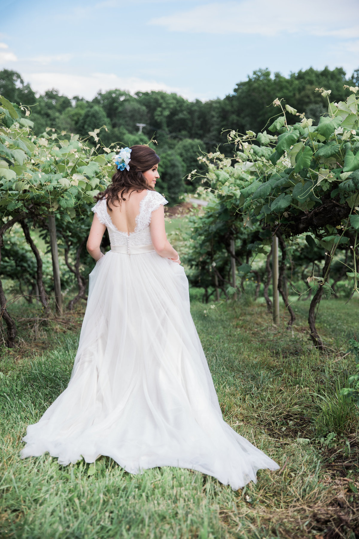 Mountain Rose Vineyard Wise Virginia Summer Wedding