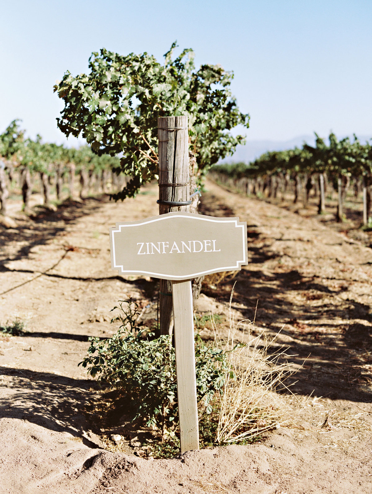 marisaholmes_vineyard_wedding_052