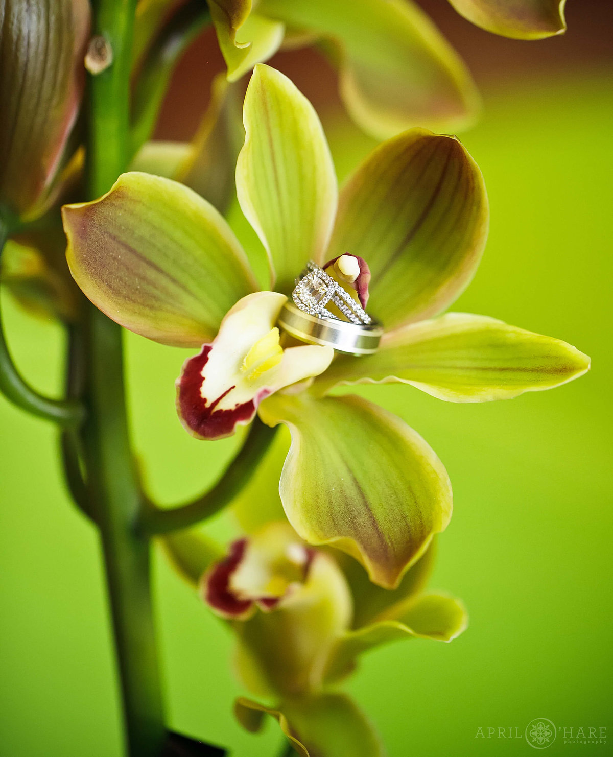 Wedding rings photographed on a bright green orchid from a Ritz Carlton Wedding in Denver Colorado