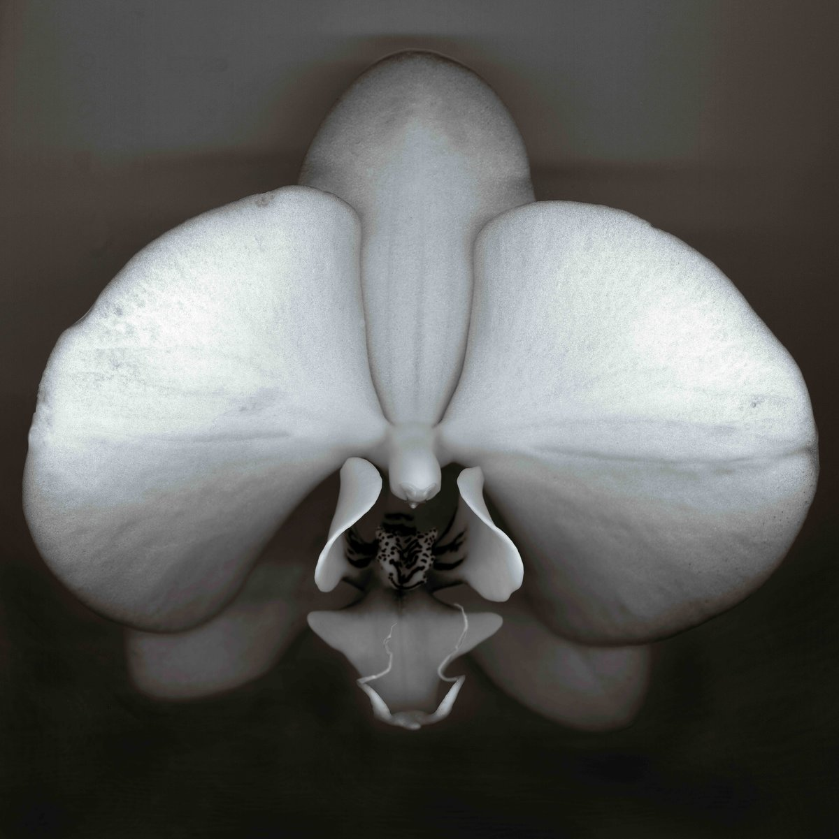 fine-art-photographer-san-francisco-bay-area-camille-rogine-scanner-orchid003
