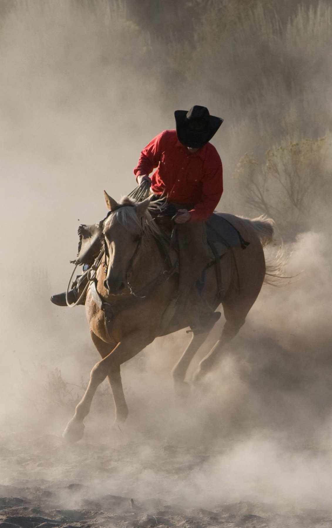 cowboy with horse in dust Lynette Smith Photography