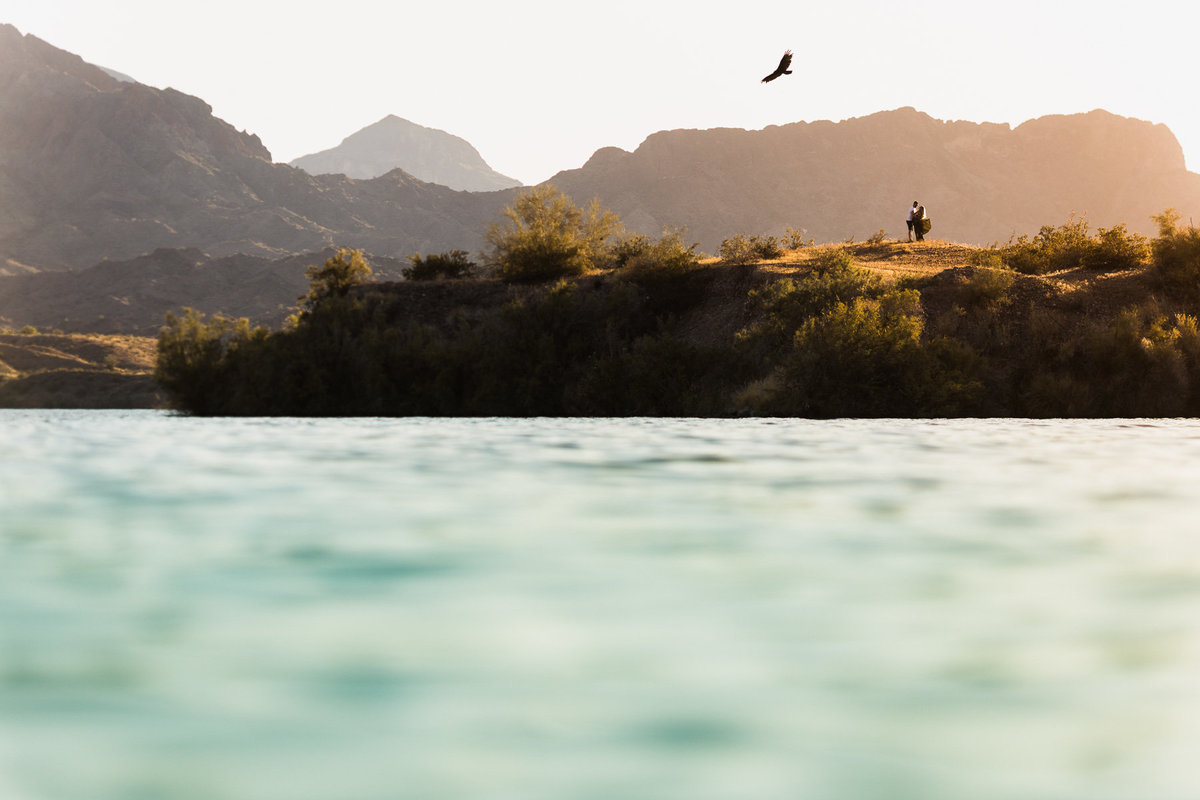 A hawk surveys the scene as a couple poses for their engagement photos in Lake Havasu, Ca.