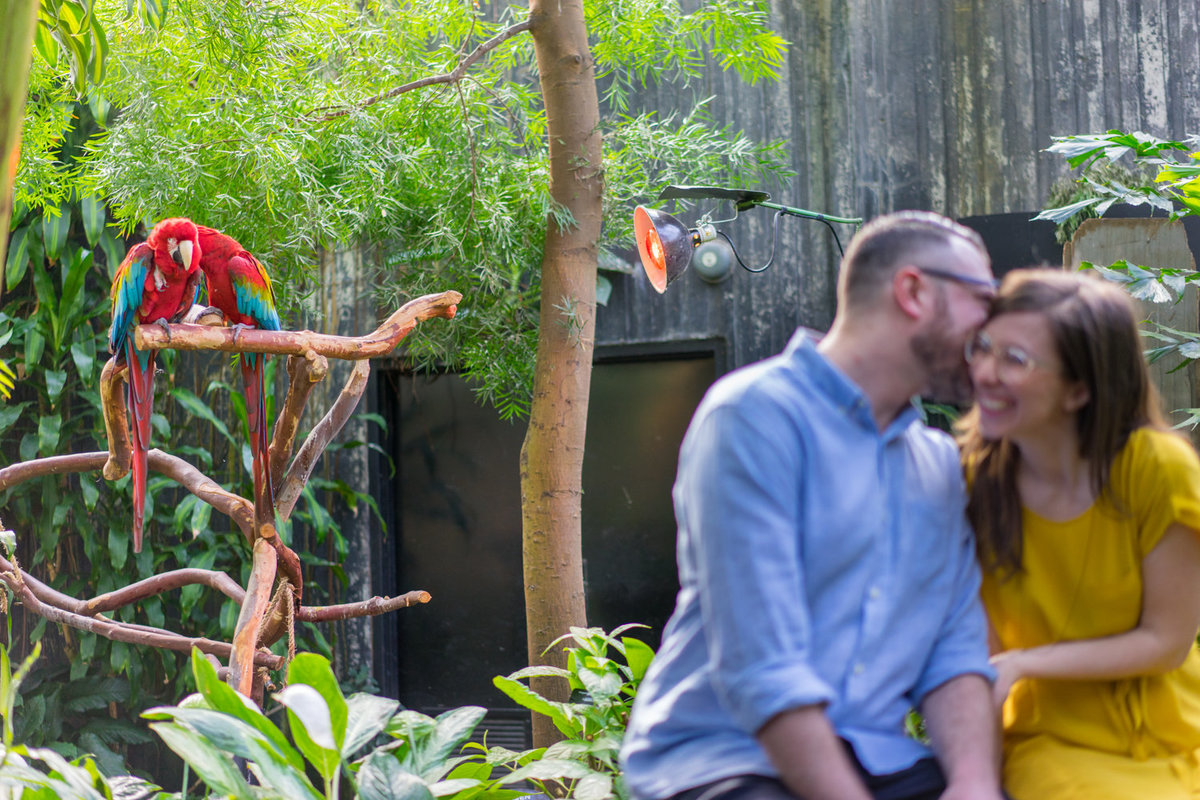 stacey-max-bloedel-conservatory-engagement (7 of 13)