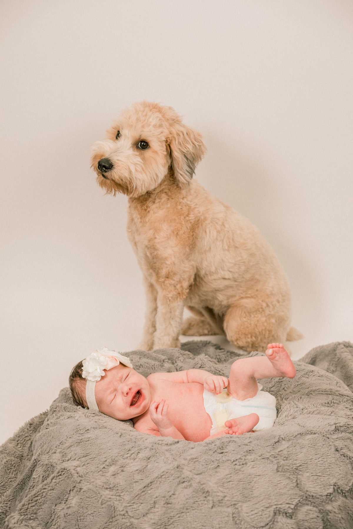 Orange County Photographer Newborn with Pets_