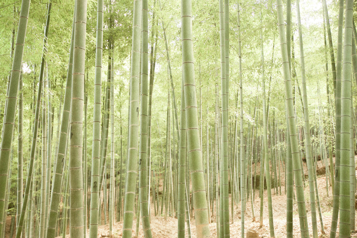 Bamboo (3 of 3)-2