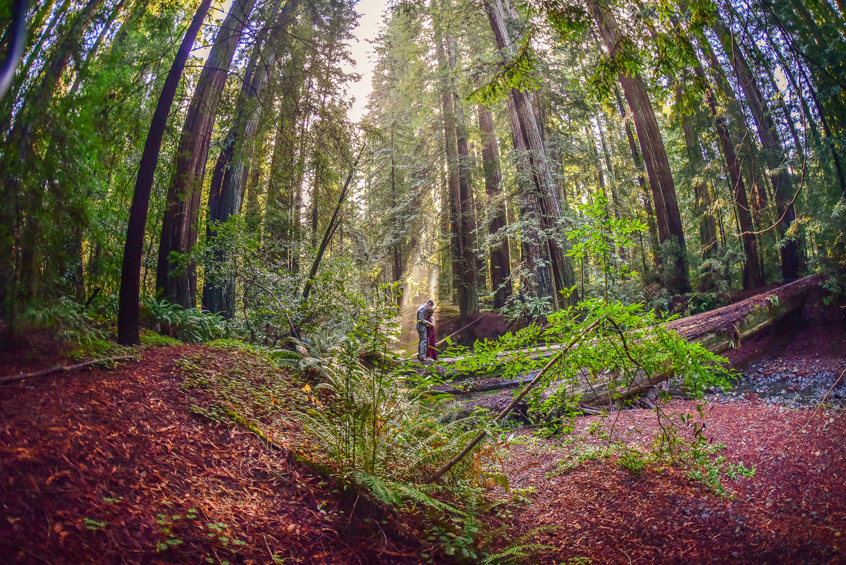 Redway-California-elopement-photographer-Parky's-Pics-Photography-redwoods-elopement-Avenue-of-the-Giants-Phillipsville-California-04.jpg