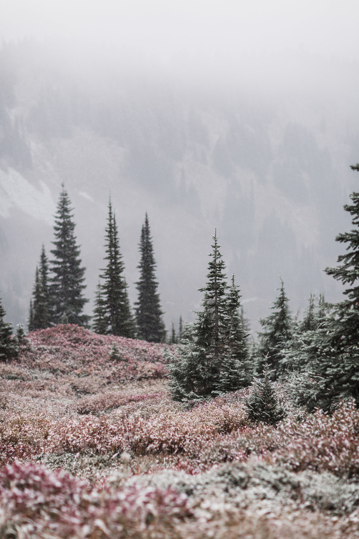 Mount-Rainier-Adventure-Elopement-70